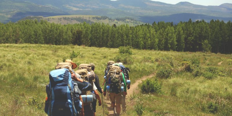 Group hiking toward a pine forest